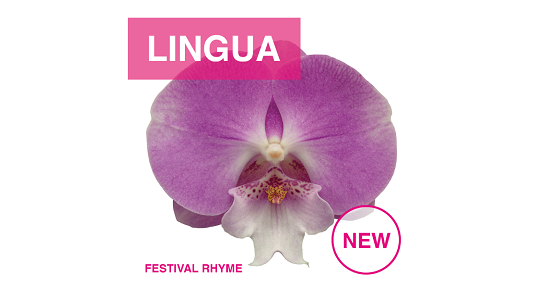 Floricultura introduces Phalaenopsis Lingua series